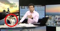 Gato irrumpe en medio de un noticiero en vivo y así reaccionó el periodista