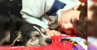 La ciencia asegura que los perros sueñan con sus amos