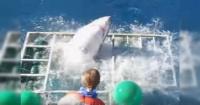 Tiburón rompe una jaula y desata el pánico entre los turistas presentes