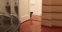 Quiso sorprender a su gato disfrazándose como su juguete favorito, pero nada salió como esperaba