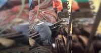 Pescadores se llevan una gran sorpresa al encontrar a una enorme criatura entre sus redes