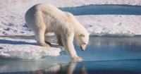 En menos de 10 años el Ártico va a desaparecer si no hacemos algo
