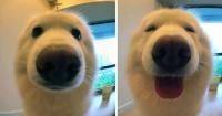 """Tiernas fotos de animales antes y después de ser llamados """"buen chico"""""""
