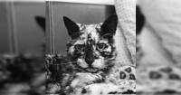 Era un gato cualquiera, pero una enfermedad decoloró su piel y ahora causa sensación en Instagram