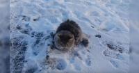 El conmovedor rescate de un gato que quedó congelado y pegado al suelo