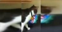 """La """"hollywoodense"""" maniobra de un gato para robar comida desde un estante"""
