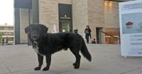 Este centro comercial le da hogar a los perros abandonados hasta que encuentren un dueño
