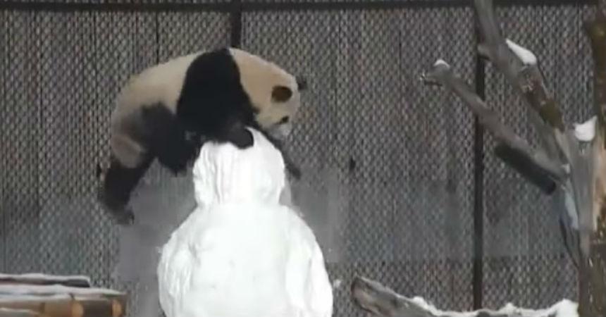 oso-panda-1