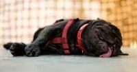 5 trucos para lograr dormir en las insoportables noches de calor