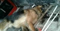 Perro le salva la vida a su dueña y ella lo deja morir en plena calle