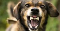 De esta forma lograrás que tu perro deje de ladrar por todo
