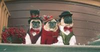 La dosis navideña del día: adorables perros pug protagonizan videoclip y revolucionan Internet