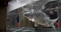 Repudio por cruel experimento de youtuber que congeló a un pez con nitrógeno líquido