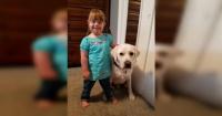 Este perro labrador le salva la vida todos los días a su pequeña dueña