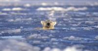 Temperatura del Polo Norte alcanza 4,4° celsius por sobre lo normal y se teme lo peor