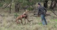 La arriesgada maniobra de un hombre para rescatar a su perro del ataque de un canguro que desató la controversia