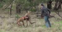 La triste historia tras el video del hombre que golpea a un canguro para salvar a su perro