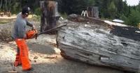 Tomó un viejo tronco y lo convirtió en una verdadera obra de arte