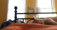 """Su gato lo despertaba toda las mañanas y él decidió """"vengarse"""" de esta genial forma"""