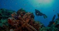 """Encontraron un barco hundido hace 1.800 años y en su interior tenía un """"manjar"""" que enloquecía a los romanos"""