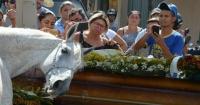 """""""Era como si supiera lo que pasaba"""": caballo conmueve al """"llorar"""" en el funeral de su jinete"""