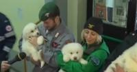 El conmovedor rescate de tres cachorros atrapados por la avalancha en Italia