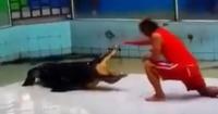 Domador tailandés sufre feroz ataque de un cocodrilo en pleno espectáculo