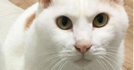 gato-860