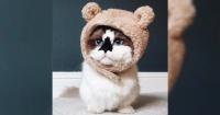 """""""Albert Baby Cat"""": el gato más famoso del mundo que revoluciona las redes sociales"""
