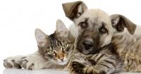 """""""Defensora"""" de mascotas fue condenada por matar a más de dos mil animales"""
