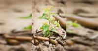 Ejército estadounidense fabricará balas biodegradables que al ser disparadas germinarán plantas