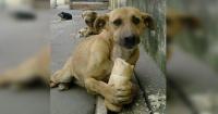 Cada persona que adopte un perro callejero pagará menos impuestos en Argentina
