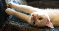 ¡Atención! Los arañazos y mordeduras de tu gato podrían ser mortales por esta razón