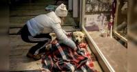 Este centro comercial abrió sus puertas a los perros callejeros para resguardarlos del frío