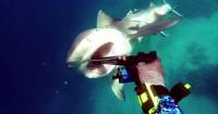 El terrorífico momento cuando un buzo es atacado por un tiburón