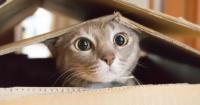 Día Internacional del Gato: 15 gifs que explican a la perfección por qué son los amos del universo