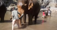 La violenta reacción de un elefante con una turista que le acarició la trompa