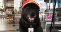 """Este perro fue abandonado en una gasolinera y ahora es el """"mejor empleado"""""""