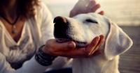 Esto es lo que debes hacer para agradarle a tus mascotas
