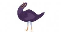 ¿Por qué todo el mundo está publicando esta paloma en Facebook? Esta es la explicación