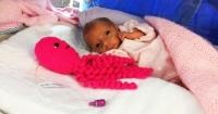 La insospechada razón por la que en los hospitales ponen estos pulpos a los bebés prematuros