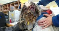 """La increíble transformación de esta """"criatura"""" luego de ser rescatada por unos veterinarios"""