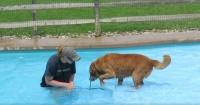 El tierno video de un perro que se atreve a nadar por primera vez