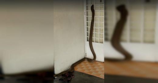 serpiente-casa-860