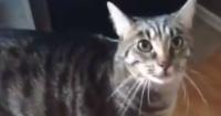 La feroz venganza de un gato al descubrir que su dueña acarició a otro felino
