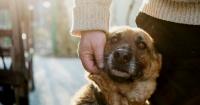 La razón de por qué amamos más a los perros que a los humanos