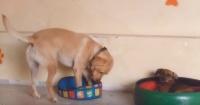 La perseverante lucha de este perro para entrar en una pequeña cama