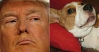 """El """"rostro"""" de Donald Trump aparece en la oreja de un perro y hace explotar la web"""