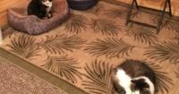 Pensó que había rescatado a un gato abandonado pero cuando su nieto lo vio, quedó en schok