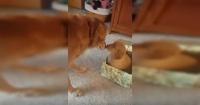 La tierna reacción de un perro al recibir un cachorro como regalo de Navidad